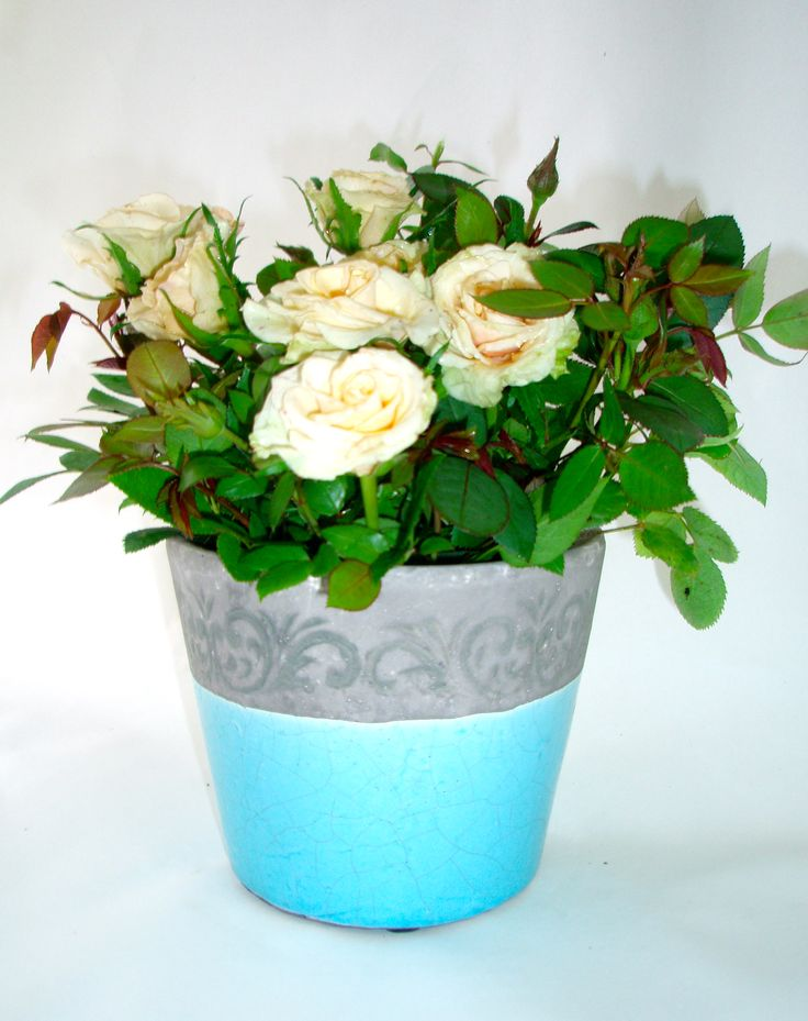 gorgeous living miniature roses in Hawkesburn stoneware ceramic pots with decorative border available at www.summerhillnurseries.com.au