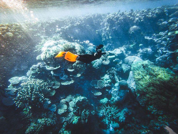 Under the ocean... Souvenir from the Great Barrier Reef #Adventure #Australia