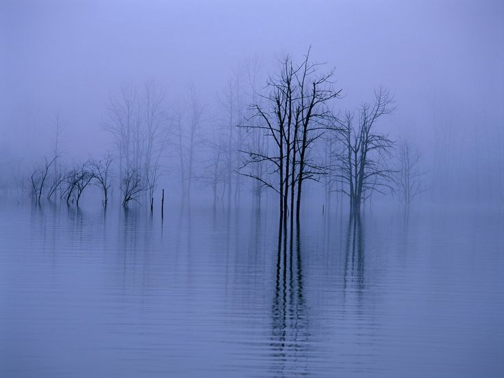 top best photographs of fog images | fog water trees category water size 1920 x 1440 keywords fog water ...