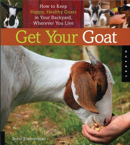 Raising goats on a backyard farm