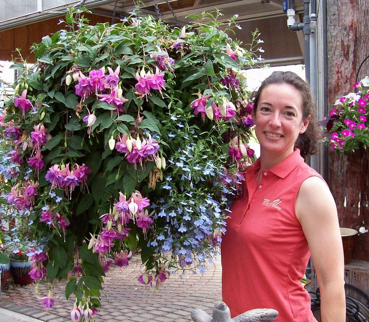 Hanging Basket Flowers Part Shade : First love fuchsia with lobelia a perfect shade