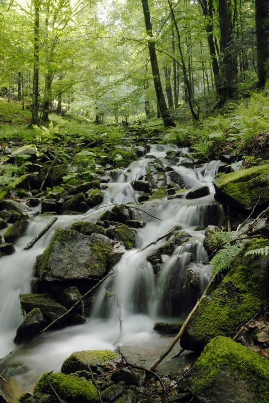 France, Vosges/Vogezen, One of the many small waterfalls