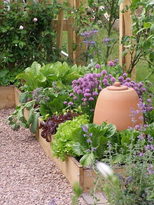 Inspiration for an Urban Kitchen Garden - very pretty combination of veggies and herbs