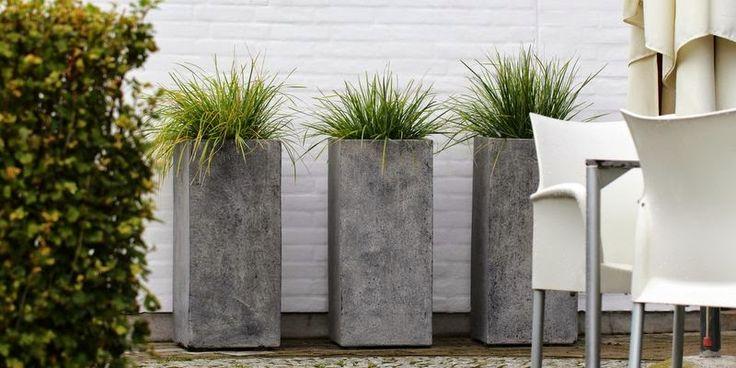 BLÅAKS I KRUKKER - Sesleria heufleriana in garden containers