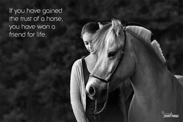 If you have gained the trust of a horse, you have won a friend for life!