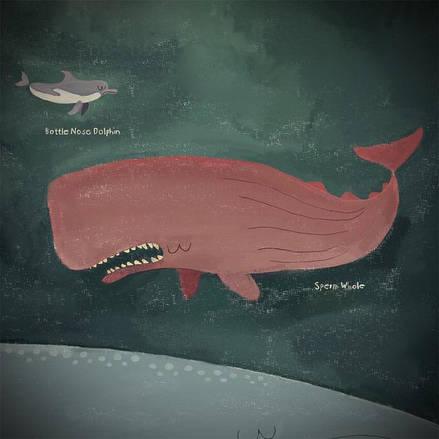 Sperm Whale, via Flickr