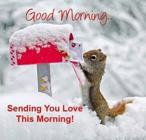Image result for Good morning with squirrel and snow blingee