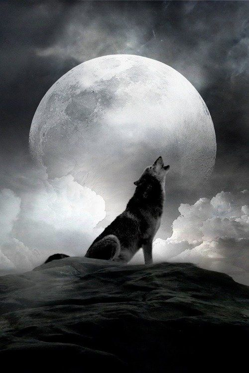 """The Irish Werewolf ~ This wolf is different from the Teutonic or European werewolf, as it is really not a """"monster"""" at all .. Unlike its continental cousins, this shapeshifter is the guardian and protector of children, wounded men and lost persons .. According to some ancient sources, Irish werewolves were even recruited by kings in time of war."""