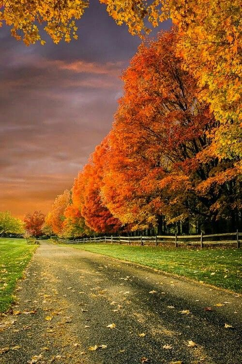 I'm not sure what I love about autumn so much but it's very beautiful
