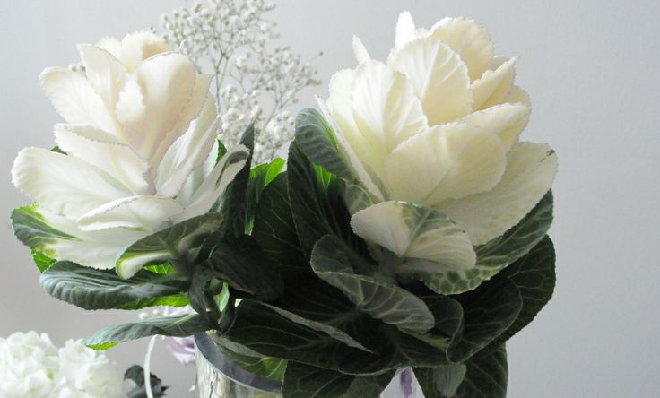 Some of our favourite winter time floral...