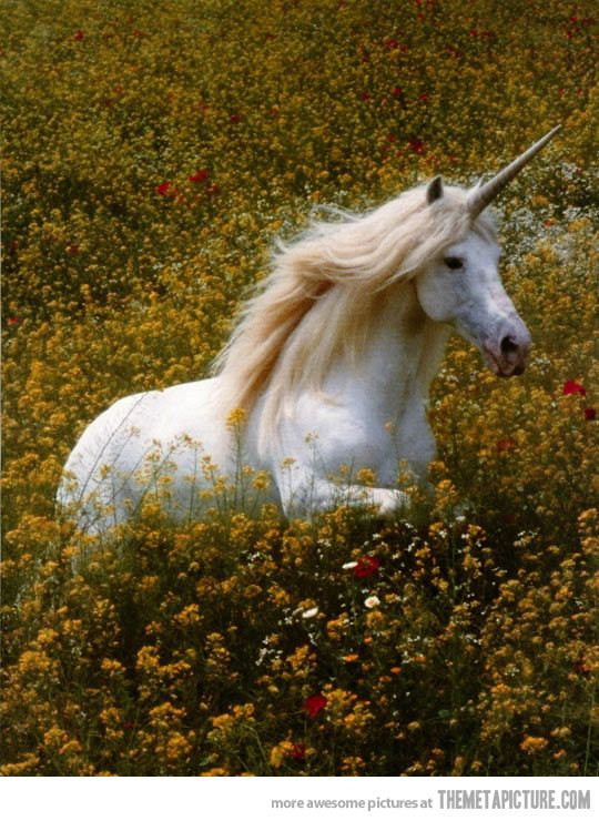 Unicorns are real, they are magical…