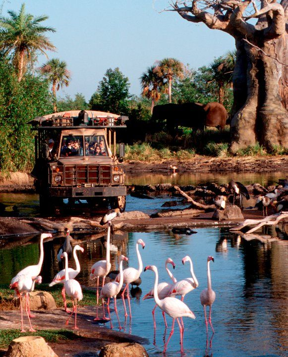 We usually go first thing -- the animals are out then.  (Later on when it's hot, they take cover).    Kilimanjaro Safaris Expedition, provides the chance to see African animals as they roam the 100-acre savanna in Disney's Animal Kingdom theme park.