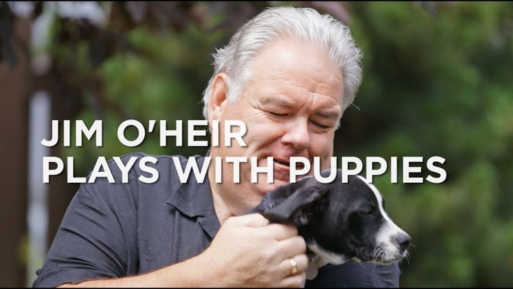 Watch Parks And Rec's Jim O'Heir play with puppies and kittens