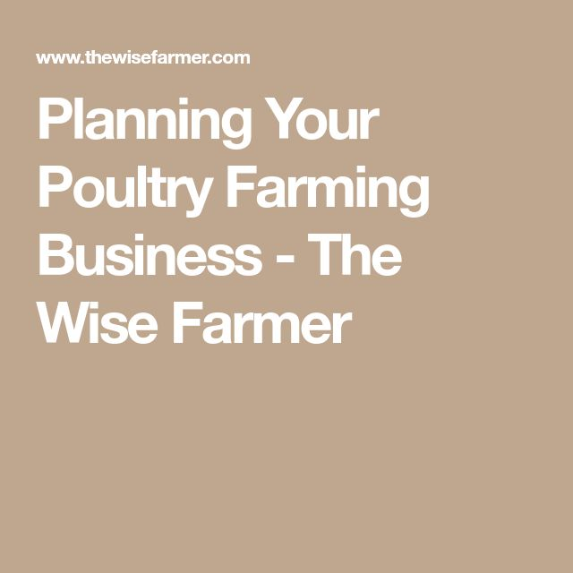 The  Best Poultry Business Ideas On   Business Pages