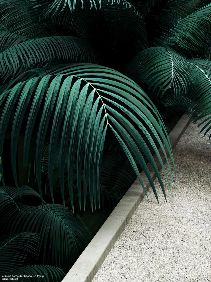 Beautiful Computer Generated Images II. Tropical Garden on Behance