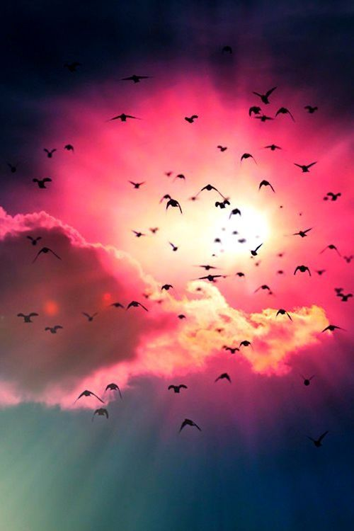 Hope is the thing with feathers that perches in the soul and sings the tune without the words and never stops at all. ― Emily Dickinson