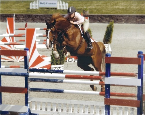 .: Young Out, Coach Hors, Horsey Dreams, Hors Farms, Favorite Animal, Magnif Hors, Dashboards, Magnificent Horses