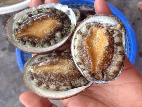 How To Catch And Cook Abalone   Cách bắt và chế biến bào ngư kiểu Úc