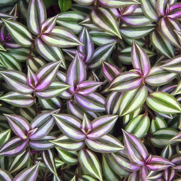 The 29 Best Indoor Plants We All Like Amp Are Non Toxic To