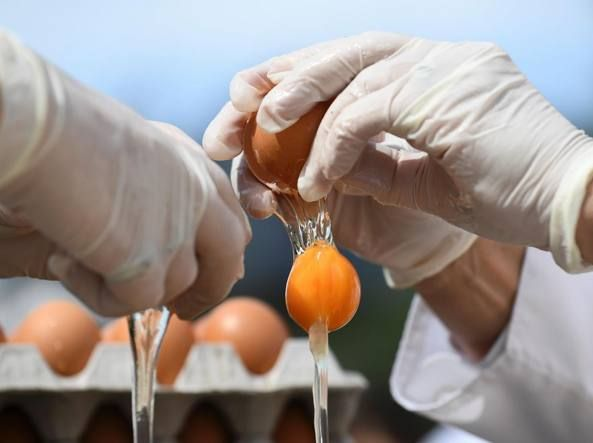 Uova al Fipronil. Cos'è e cosa si rischia. #Fipronil, #Uova, #UovaContaminate http://eat.cudriec.com/?p=5707