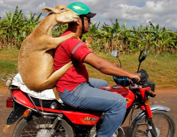 Just a normal motorcycle ride...