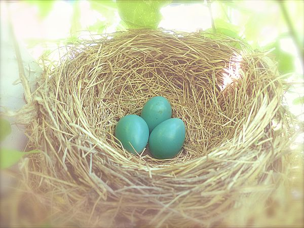 A lovely nest of baby blues in real time and real light