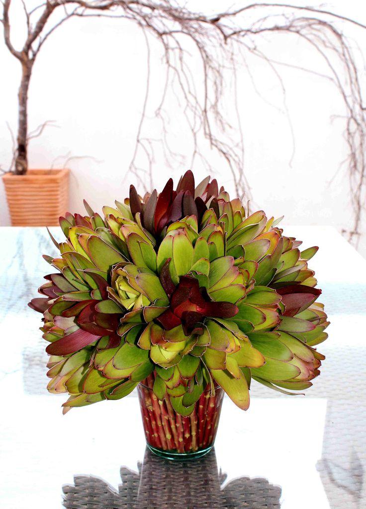 Arreglo floral de leucadendron entre tallos.