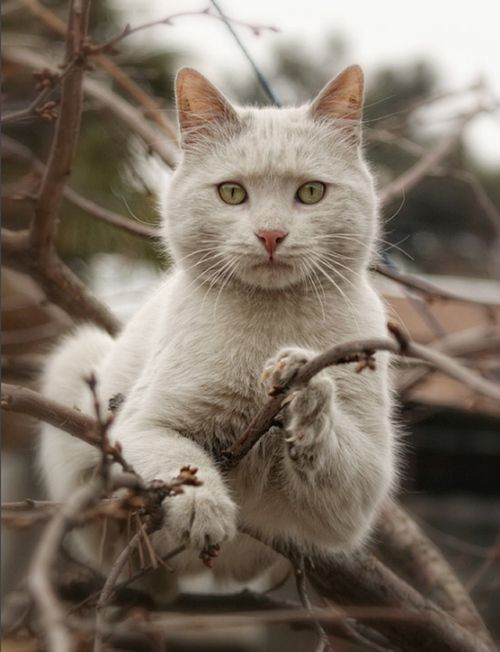.Beautiful Cat, The Face, Trees, Kittens, Kitty, Baby Cat, Caramel Apples, Animal, White Cat