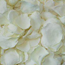 Click to Order White/Cream Rose Petals