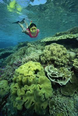 Best places to snorkel. Fortunately, 7-mile beach is on the list, which is a short walk from hotel :)