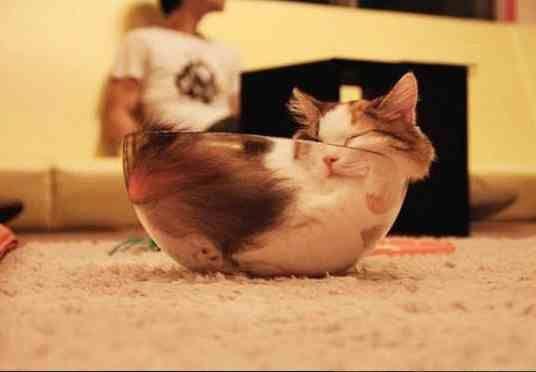 Chats sous forme liquide