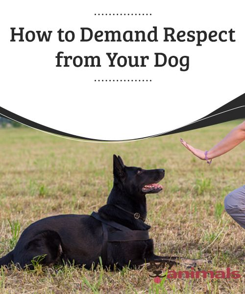 How To Demand Respect From Your Dog As We Have Commented On Many