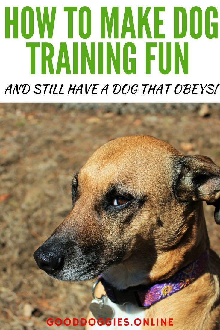 How To Make Dog Training Fun Dog Training Near Me Dog Training