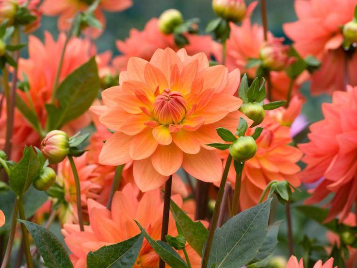 Flowering Bulbs Planted in Spring   DIY Garden Projects   Vegetable Gardening, Raised Beds, Growing & Planting   DIY
