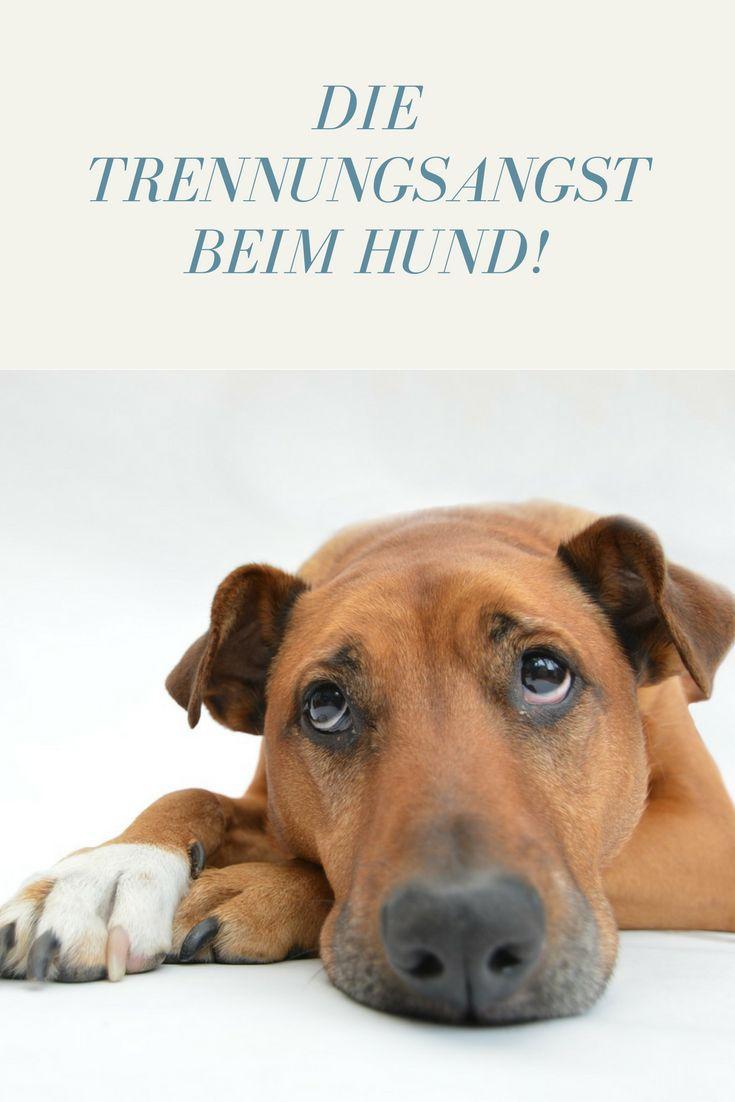 Trennungsangst - warum Dein Hund alleine leidet