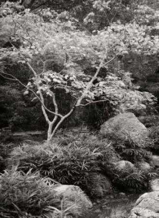 Japanese Park I BandW