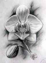 Beste Tattoo Frauen Oberarm Orchideen 56 Ideen   – tattoo.