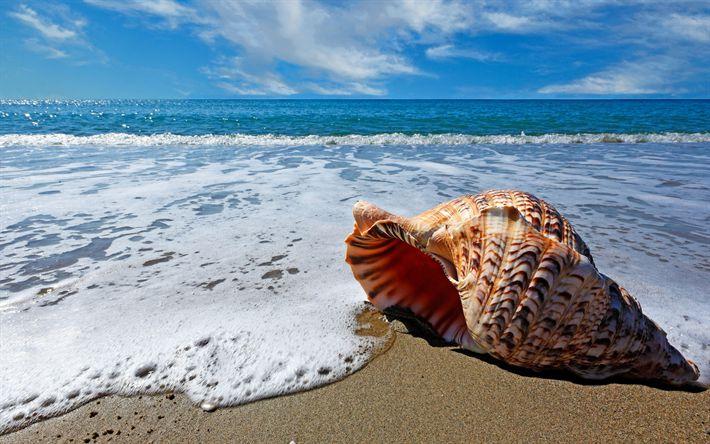 Hämta bilder Havet, seashells, 4k, beach, vågor, kusten, sommar