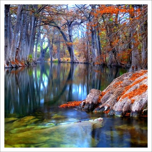 The colour, Cyprus Trees, Hunt, Texas  photo by katya horner