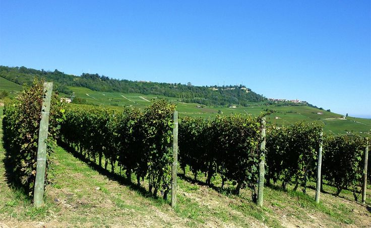 piedmont barolo vineyard