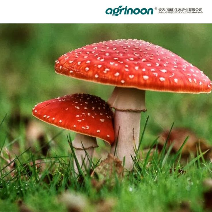 Have a look on this!! You will definitely enjoy the beauty of #mushrooms.