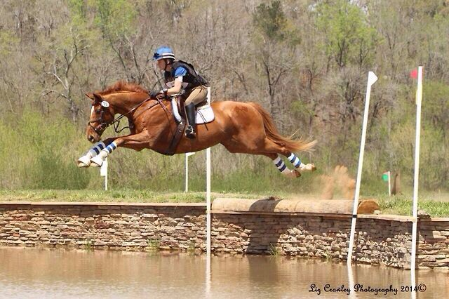 17 best images about photo u0026 39 s  horses  jumping on pinterest