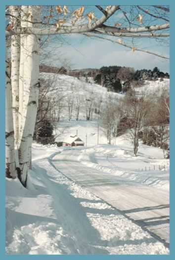 Burch Trees line the pathway to a snow covered cabin in Vermont
