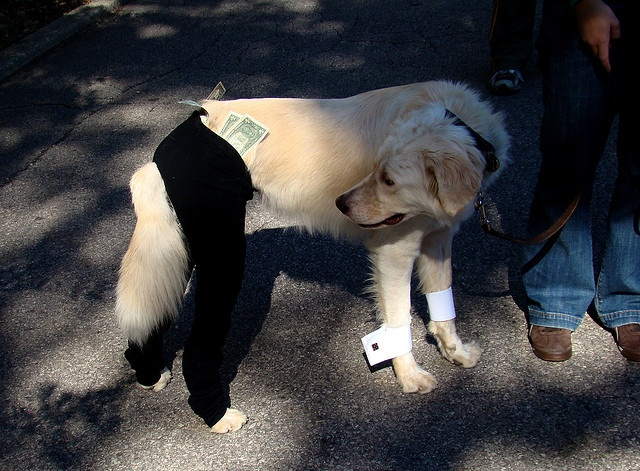 Magic Mike  Might as well make some money while humiliating your dog, right?