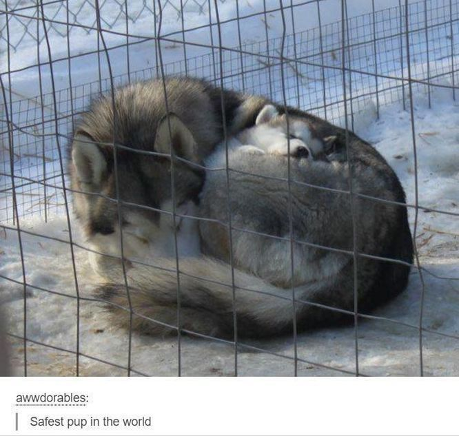 30 Funny Dog Pictures