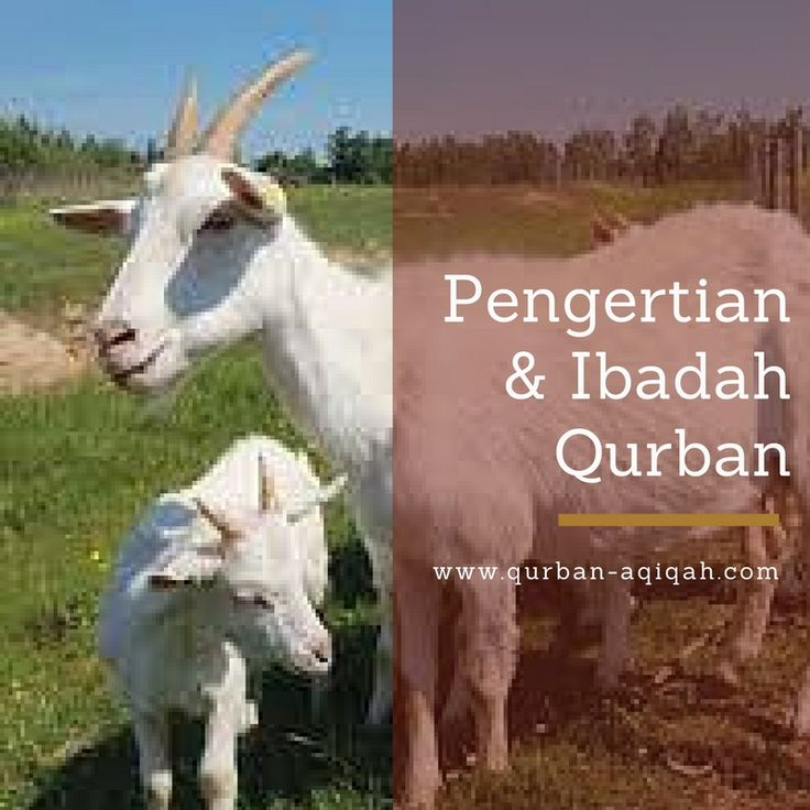 Pengertian Ibadah Qurban