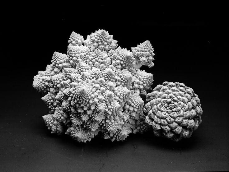 Flower of life spiral - de levensbloemspiraal van het leven zelf | Danka Husken - Smit Expert Mandala Coach | Pulse | LinkedIn