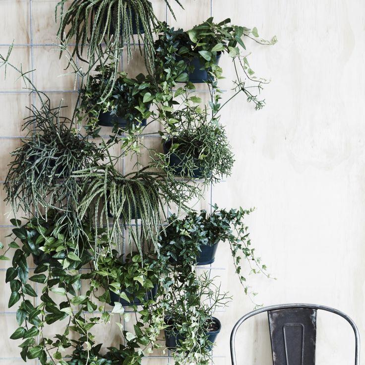 2016 har stået i planternes tegn, og vi forvandler vores hjem til små væksthuse og grønne oaser. En brændende kærlighed i vindueskarmen er ikke længere nok. Det skal være mere vildt, grønt og kreativt. Her er fem nemme idéer – lige til at gå til.