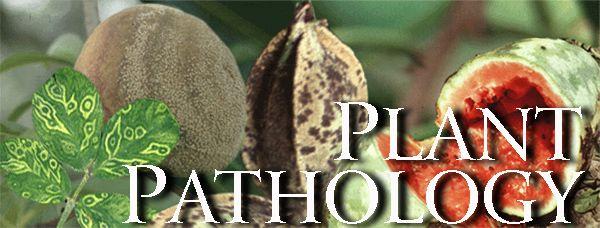 Plant Pathology program at the University of Georgia