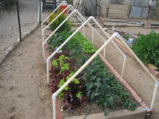 Best 25 Pvc Greenhouse Ideas On Pinterest